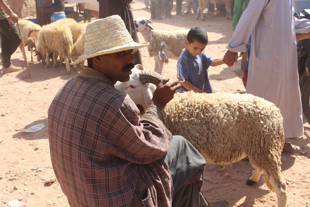 Marrakech Sheep Market Approaching Eid - Riads For Sale Marrakech from Bosworth Property